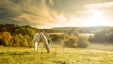 Fototapety Beautiful sensual women with white horse