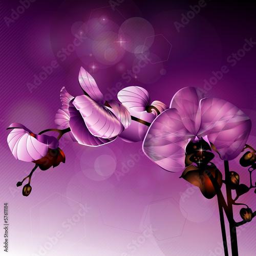 3d dark pink orchid flower illustration