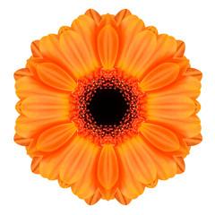 Orange Mandala Gerbera Flower Kaleidoscope Isolated