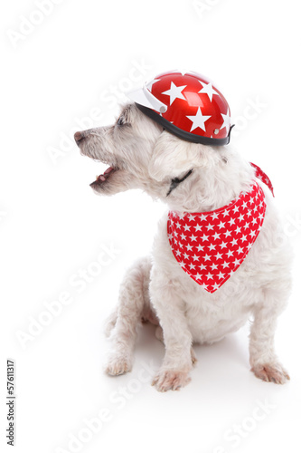 Barking Biker Dog