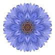Blue Chrysanthemum Mandala Flower Kaleidoscope Isolated on White