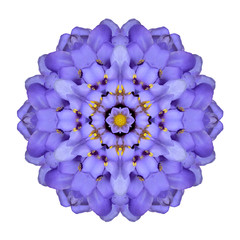 Mandala Flower Isolated Blue Iberis Kaleidoscope