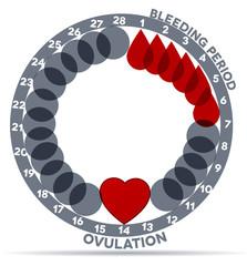 Menstrual cycle Bleeding-  drop symbol; ovulation- heart.