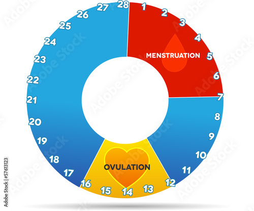 Menstrual cycle graphic