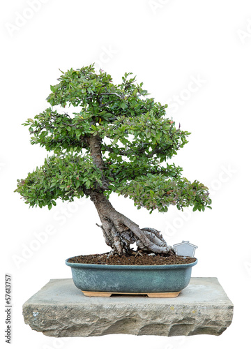 Aluminium Bonsai Bonsai tree