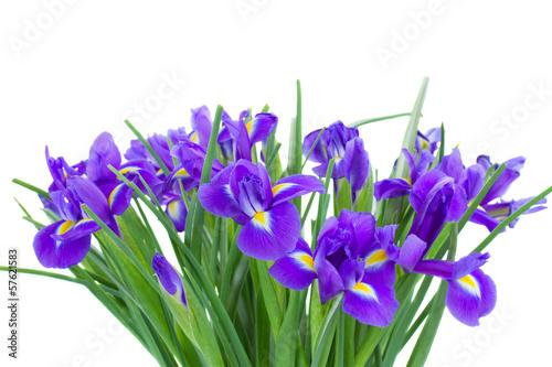 Foto op Canvas Iris bunch of blue irise flowers