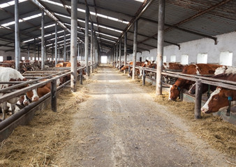 farm for cattle from the inside during