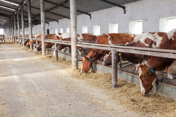 farm for cattle  inside during