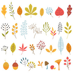 Autumn floral design elements