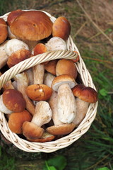 Basket with wild forest mushrooms