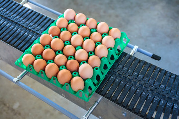 Conveyor belt transporting a crate with fresh eggs