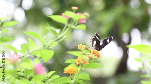 Tropical butterfly sitting on green grass field with flower