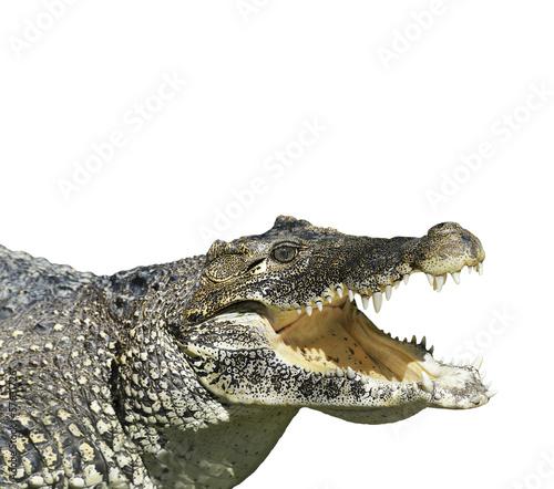 Fotobehang Krokodil Crocodile With Open Mouth