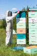 Beekeeper Using Fume Board on Hive