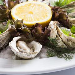 Fresh oysters