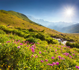 Blooming pink flowers in the Caucasian mountains