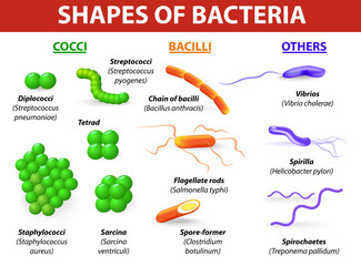 morphological differences between bacteria