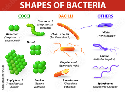 morphological differences between bacteria - 57643531