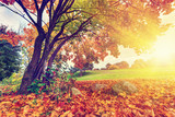 Autumn, fall in park. Sun shining through colorful leaves