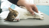 Cat anesthesia in veterinary