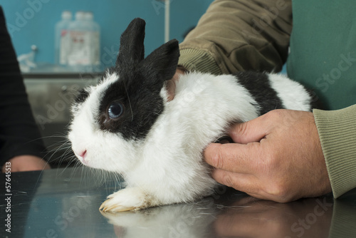 Rabbit in a veterinary office