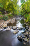 water flow through forest