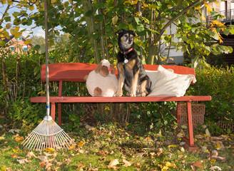 Hund auf der Gartenbank im Herbst