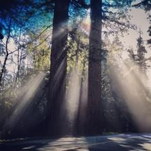 Słońce świeci przez drzewa
