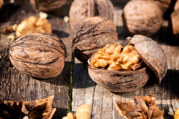 Walnut in shell