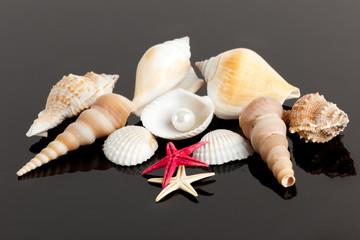 The exotic sea shell . treasure from the sea
