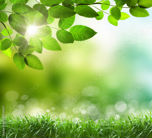 Soft defocused spring background