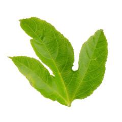 Green leaf passion fruit