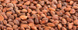 Background of pine nuts.