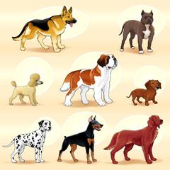 Groups of dog.