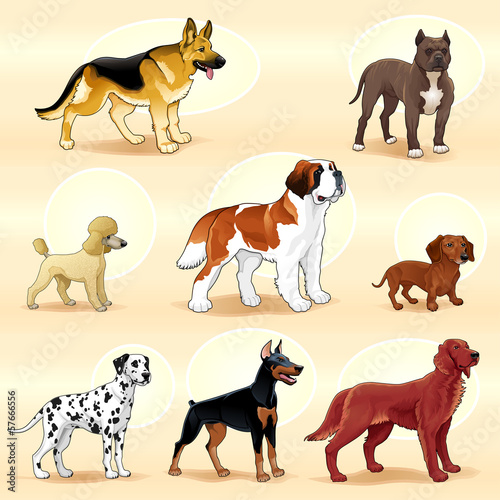 Groups of dog.