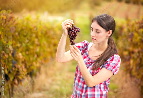 woman looks the grapes in the vineyard