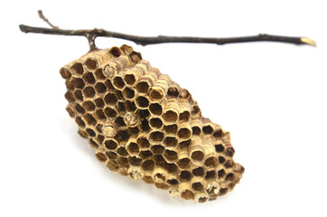 wasps' nest with branches on white background