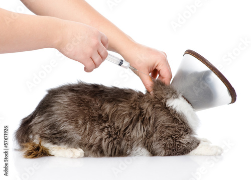 kitten getting a vaccine at the veterinary clinic. isolated
