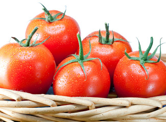 The ripened tomatoes in water drops in a wattled basket..