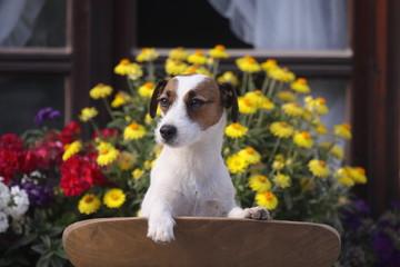 Hund vor Blumen