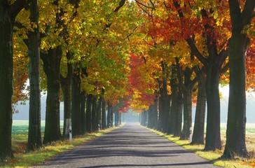 Allee im Herbst - avenue in fall 28