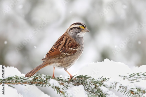 Aluminium Vogel Bird In Snow