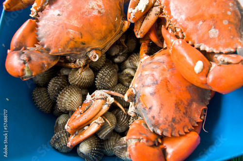 crab and cockles for cooking