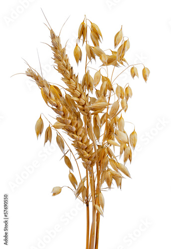 oats and wheat isolated on white