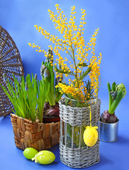 Easter still life with mimosa, narcissus and muscari