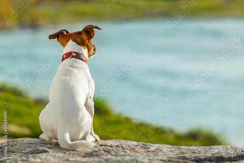 canvas print picture dog watching