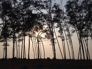 Trees on the sunset