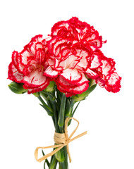 beautiful pink carnations isolated on white