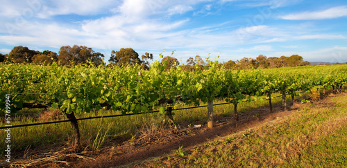 Vineyards in Swan Valley, near Perth, Australia