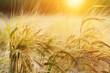 Leinwanddruck Bild - Wheat background